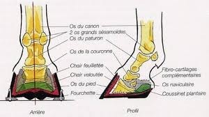 interne-pied