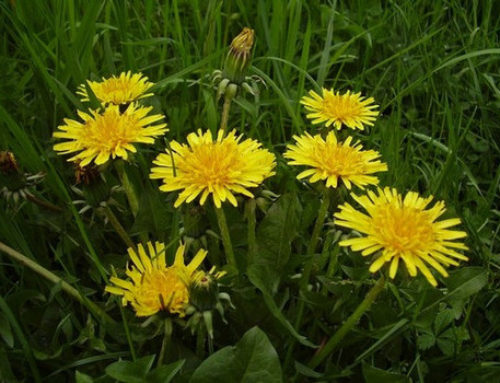 Comment utiliser correctement les cures de plantes?