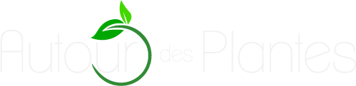 logo-big-white